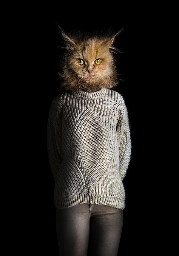 Miguel Vallinas, 'Cat – Portrait Number Seventy Seven', stampa fotografica opaca, 70 x 50 cm