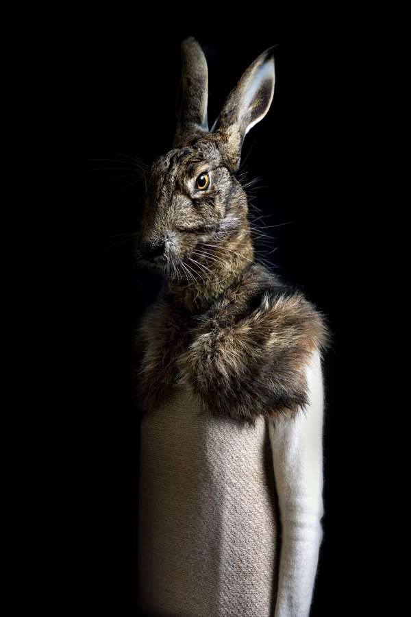 Miguel Vallinas, 'Rabbit – Portrait Number Twenty Nine', stampa fotografica opaca,70 x 50 cm