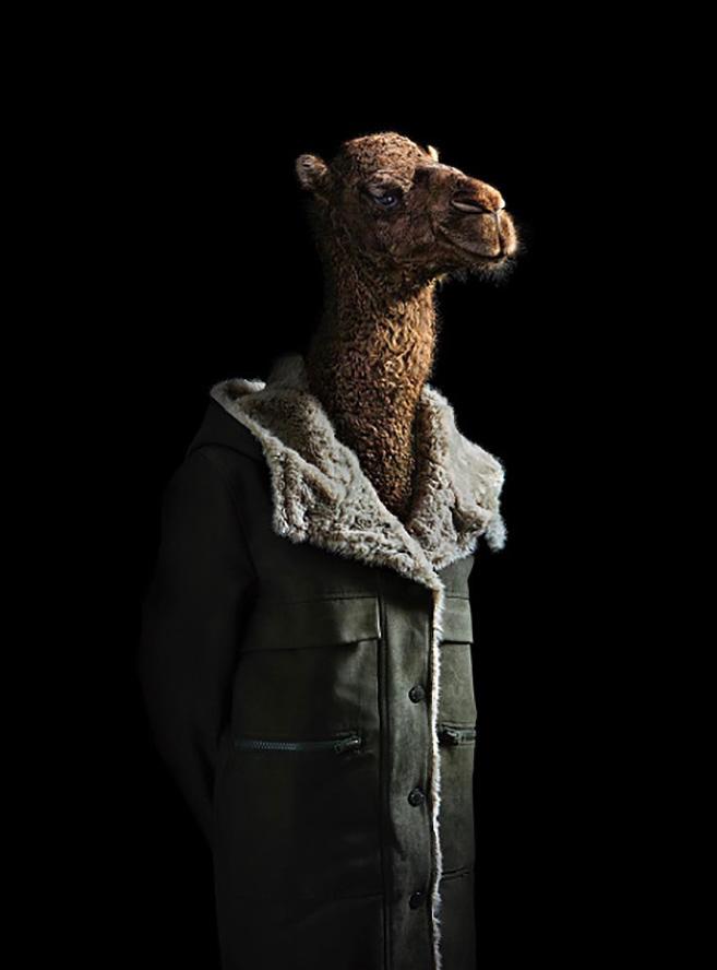 camel_mlia