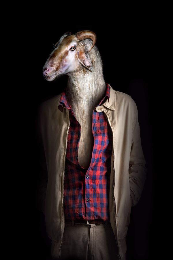 Goat 35